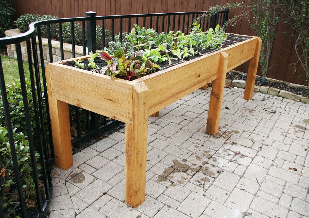 elevated garden beds to ease back pain